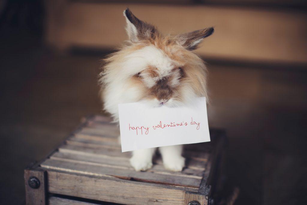 Valentin-napi öngondoskodás